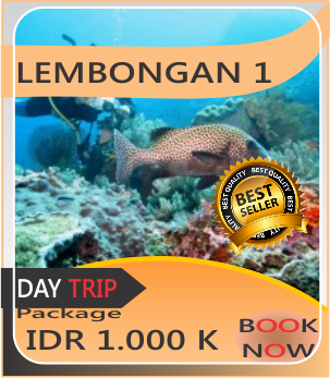 Lembongan Day trip Tour